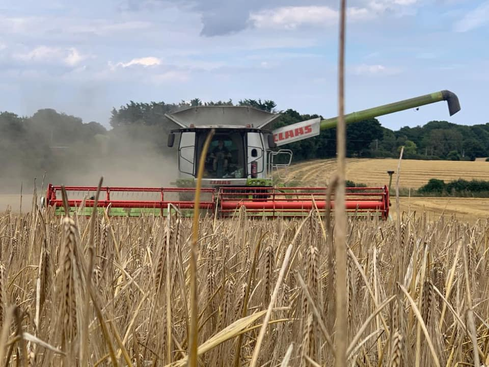 Claas Lexion 770 harvesting barley, 2020